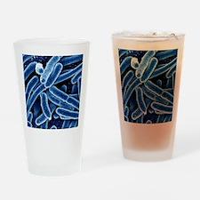 Escherichia coli bacteria, SEM Drinking Glass