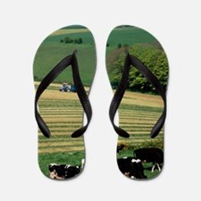 Cows grazing in a field with haymaking  Flip Flops