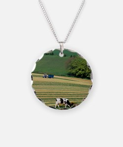 Cows grazing in a field with Necklace