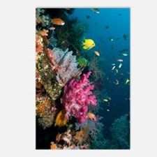 Coral reef, Indonesia Postcards (Package of 8)