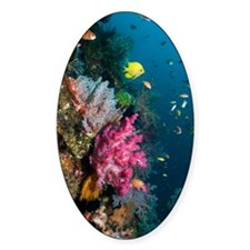 Coral reef, Indonesia Decal