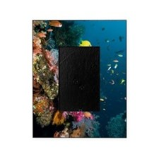 Coral reef, Indonesia Picture Frame
