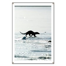 European otter on sea ice Banner