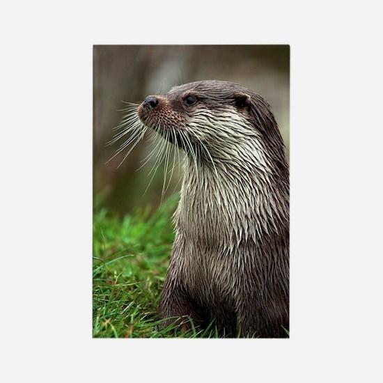 European otter Rectangle Magnet