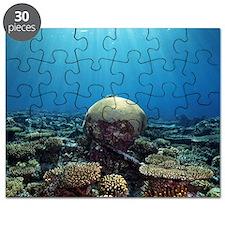 Coral garden Puzzle