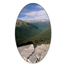 Coniferous forest Decal