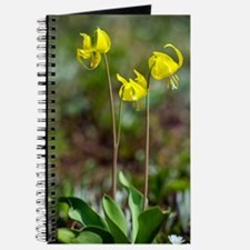 Erythronium grandiflorum Journal