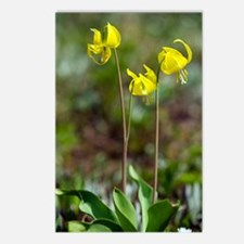 Erythronium grandiflorum Postcards (Package of 8)