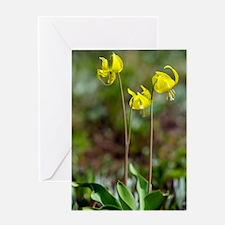 Erythronium grandiflorum Greeting Card