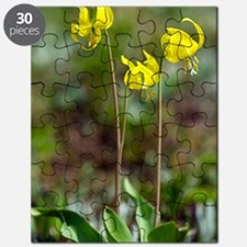 Erythronium grandiflorum Puzzle