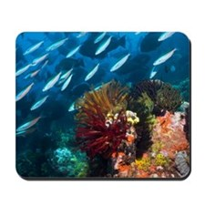 Coral reef, Indonesia Mousepad