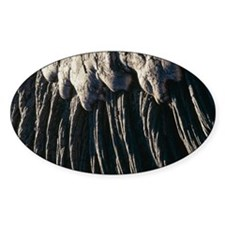 Cooled pahoehoe lava, Hawaii Decal