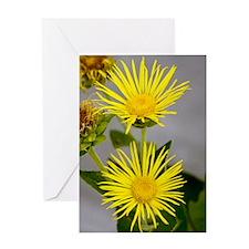 Elecampane (inula helenium) Greeting Card