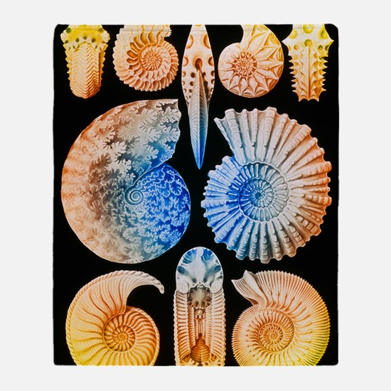 Computer artwork of ammonites (from  Throw Blanket