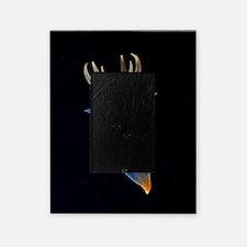 Common clione Picture Frame