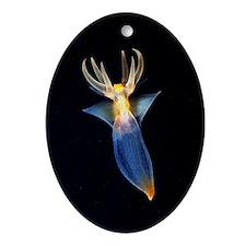 Common clione Oval Ornament