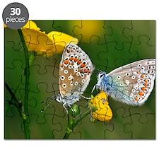 Common Blue Butterflies Puzzle