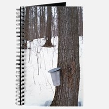 Collecting maple tree sap Journal