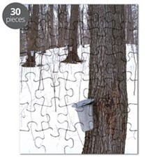 Collecting maple tree sap Puzzle