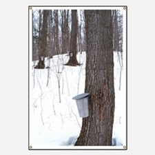 Collecting maple tree sap Banner