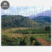 Coffee plantation Puzzle