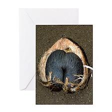 Coco de mer (Lodoicea maldivica) fru Greeting Card