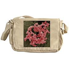 E. coli bacteria, SEM Messenger Bag