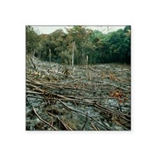 """Clearing of the rainforest  Square Sticker 3"""" x 3"""""""
