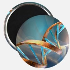 DNA molecule, artwork Magnet