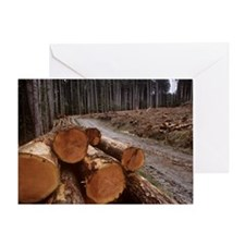 Cleared forest Greeting Card