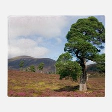 Cleared scots pine forest Throw Blanket