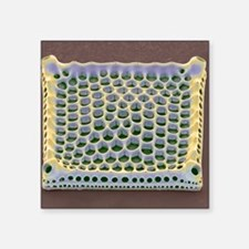 "Diatom, SEM Square Sticker 3"" x 3"""