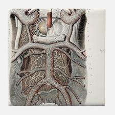 Circle of Willis nerves, 1844 artwork Tile Coaster