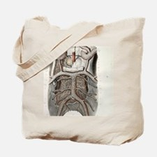 Circle of Willis nerves, 1844 artwork Tote Bag