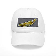 Diatom, light micrograph Baseball Cap