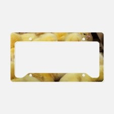 Chicks License Plate Holder