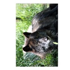 GRAYS WOLF Postcards (Package of 8)