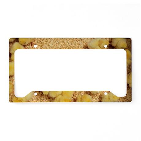 Chicks License Plate Holder