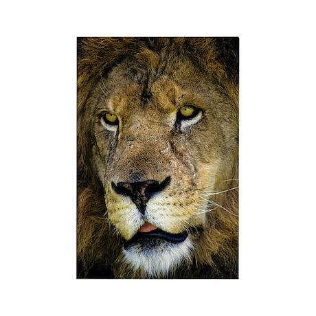 Portrait of a Lion Rectangle Magnet