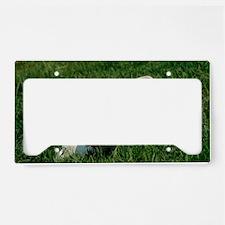 Charolais calf License Plate Holder