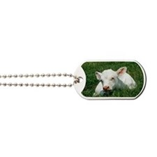 Charolais calf Dog Tags