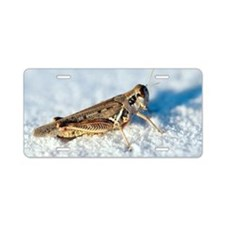 Desert locust, on white gyp Aluminum License Plate