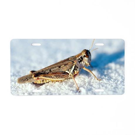 Desert locust, on white gyp Aluminum License Plate