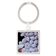 Candida albicans yeast cells, SEM Square Keychain