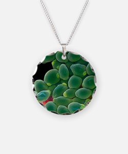 Candida albicans yeast cells Necklace