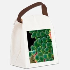 Candida albicans yeast cells, SEM Canvas Lunch Bag