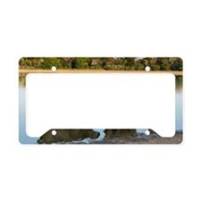 Capybara family License Plate Holder