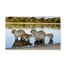 Capybara family Car Magnet 20 x 12