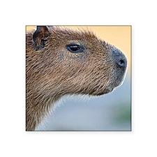 "Capybara Square Sticker 3"" x 3"""