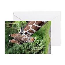 Reticulated Giraffe 3 Greeting Card
